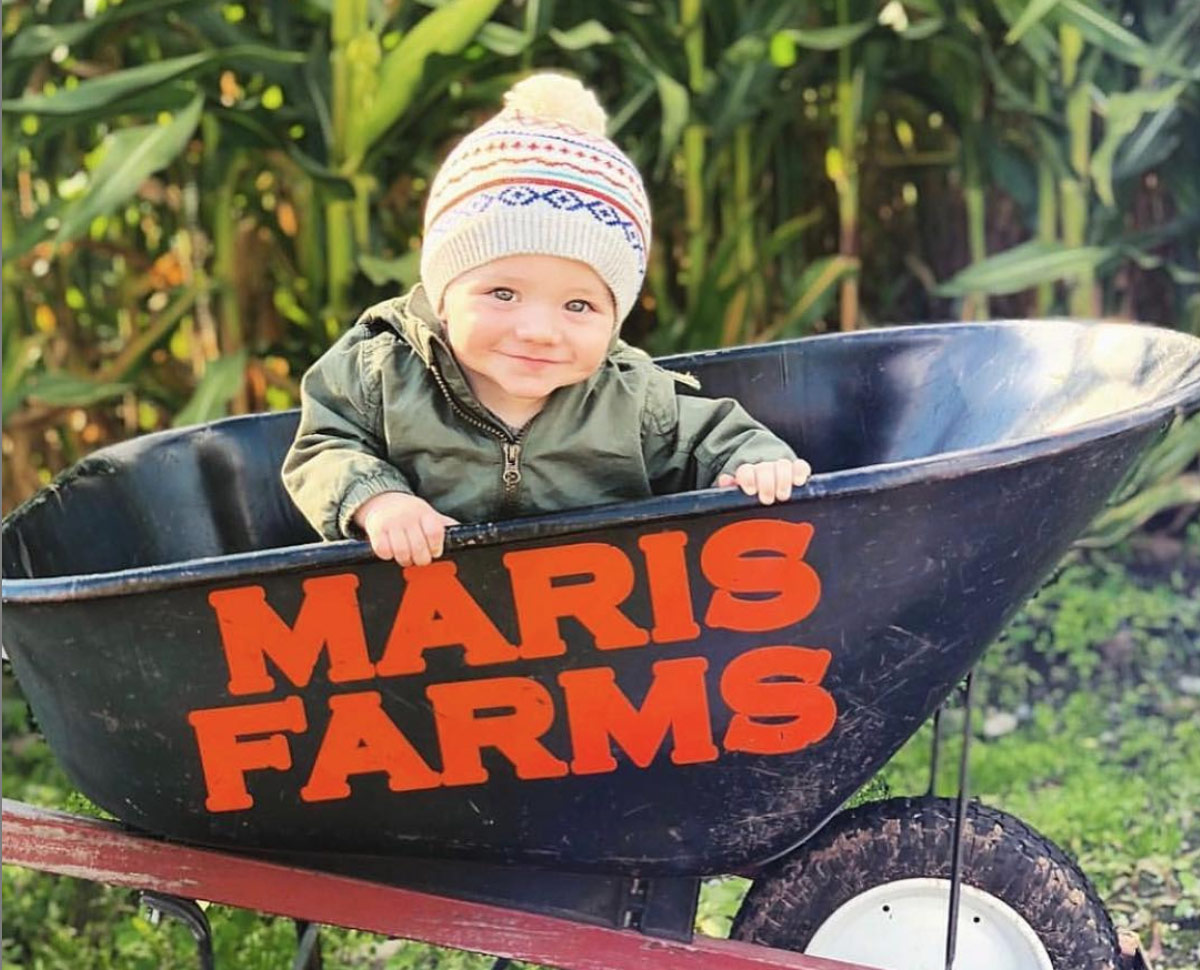 Maris Farms pumpkin patch and corn maze in Buckley, wa